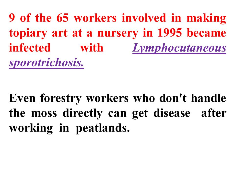 9 of the 65 workers involved in making topiary art at a nursery in 1995 became infected with Lymphocutaneous sporotrichosis.