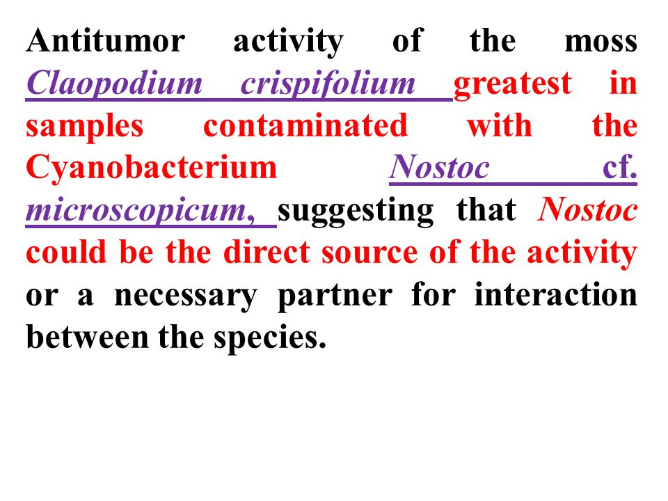 Antitumor activity of the moss Claopodium crispifolium greatest in samples contaminated with the Cyanobacterium Nostoc cf. microscopicum, suggesting that Nostoc could be the direct source of the activity or a necessary partner for interaction between the species.