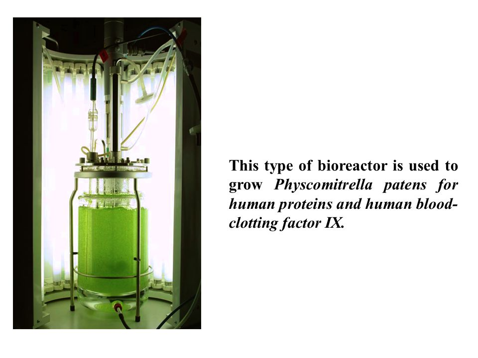 This type of bioreactor is used to grow Physcomitrella patens for human proteins and human blood-clotting factor IX.