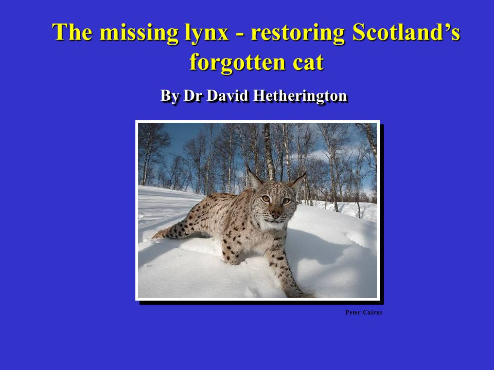 The missing lynx - restoring Scotland's By Dr David Hetherington
