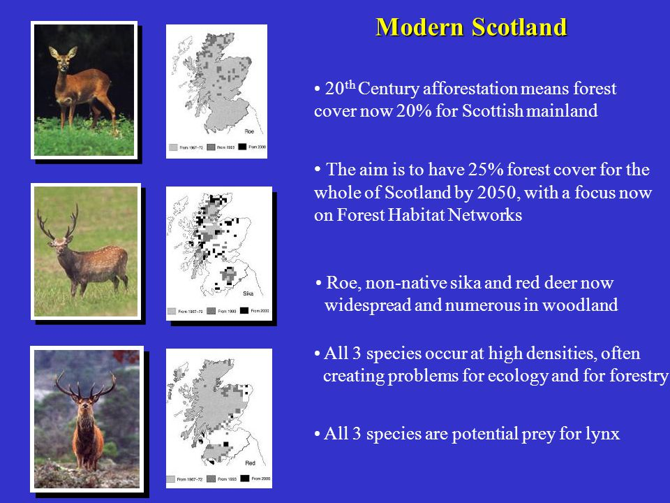 Modern Scotland 20th Century afforestation means forest cover now 20% for Scottish mainland.