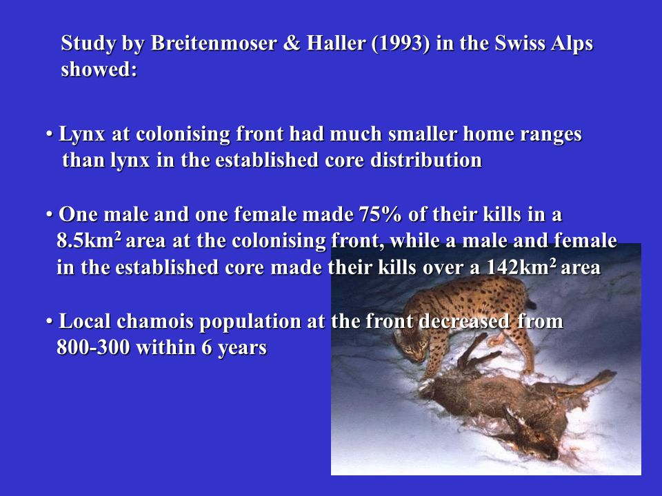 Study by Breitenmoser & Haller (1993) in the Swiss Alps
