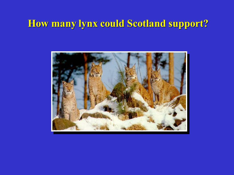 How many lynx could Scotland support