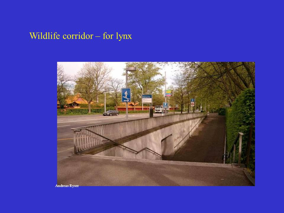 Wildlife corridor – for lynx