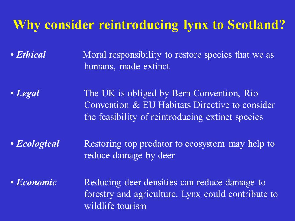 Why consider reintroducing lynx to Scotland