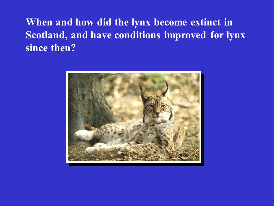 When and how did the lynx become extinct in Scotland, and have conditions improved for lynx since then