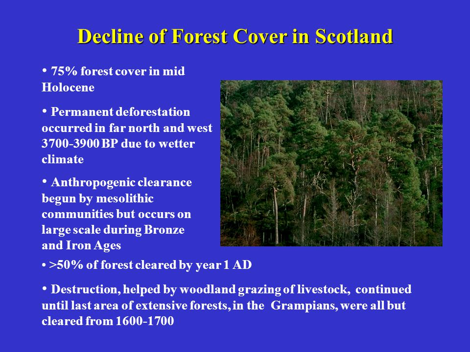 Decline of Forest Cover in Scotland