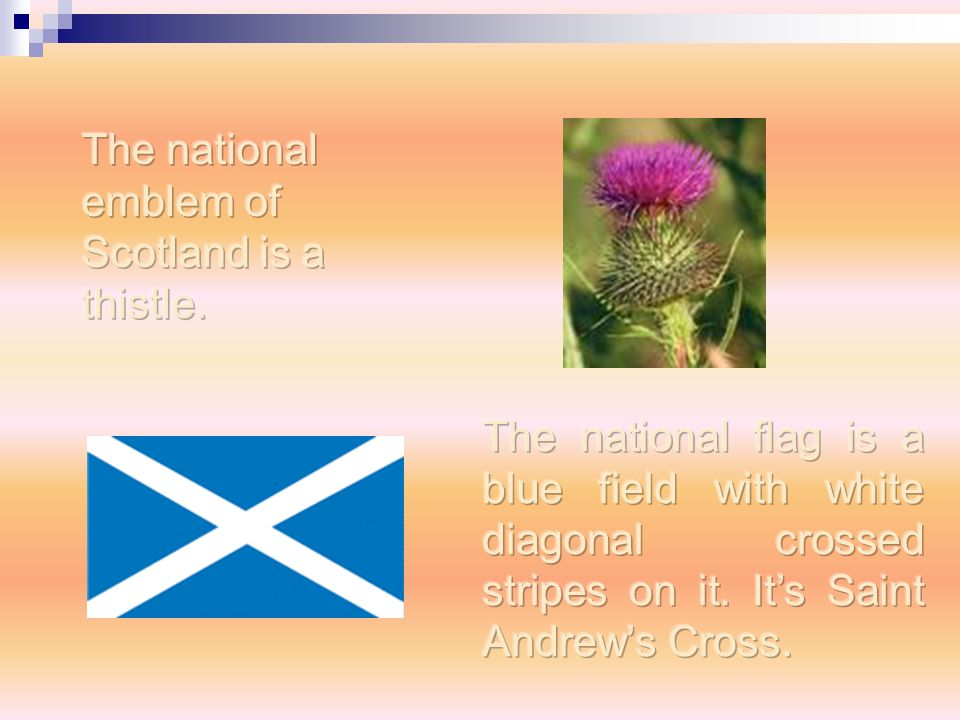 The national emblem of Scotland is a thistle.