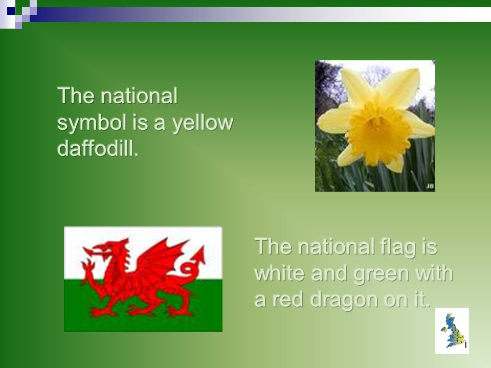 The national symbol is a yellow daffodill.
