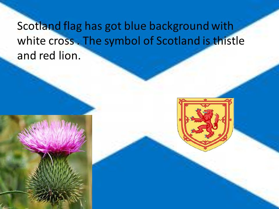 Scotland flag has got blue background with white cross