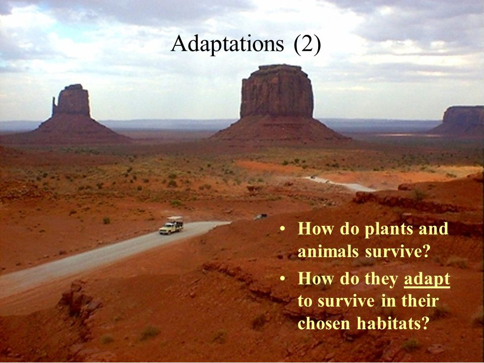 Adaptations (2) How do plants and animals survive