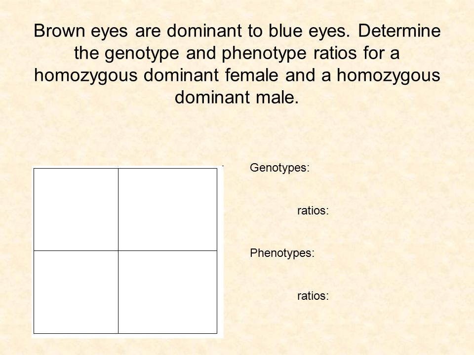 Brown eyes are dominant to blue eyes