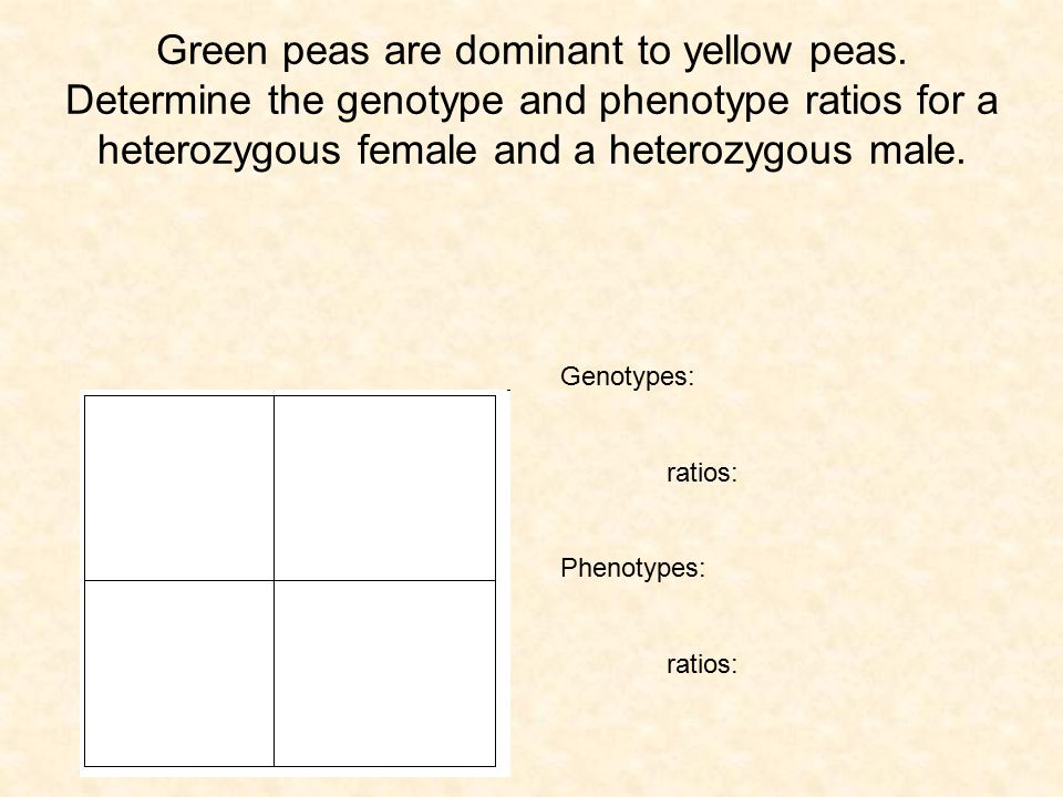 Green peas are dominant to yellow peas