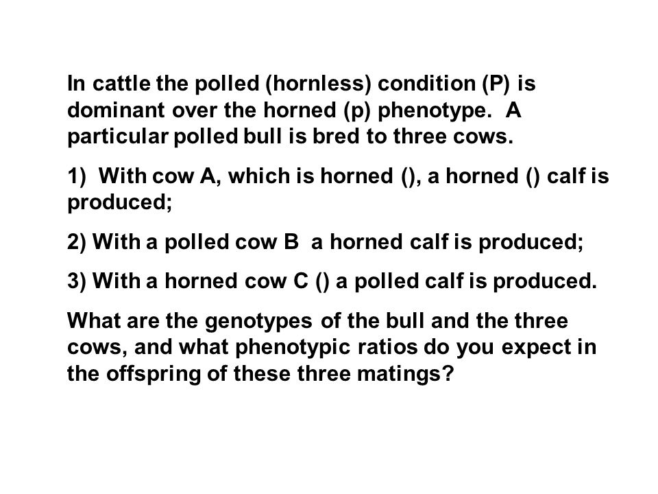 In cattle the polled (hornless) condition (P) is dominant over the horned (p) phenotype. A particular polled bull is bred to three cows.