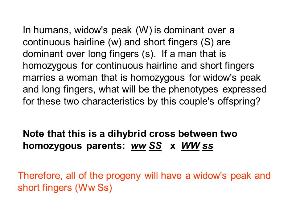 In humans, widow s peak (W) is dominant over a continuous hairline (w) and short fingers (S) are dominant over long fingers (s). If a man that is homozygous for continuous hairline and short fingers marries a woman that is homozygous for widow s peak and long fingers, what will be the phenotypes expressed for these two characteristics by this couple s offspring