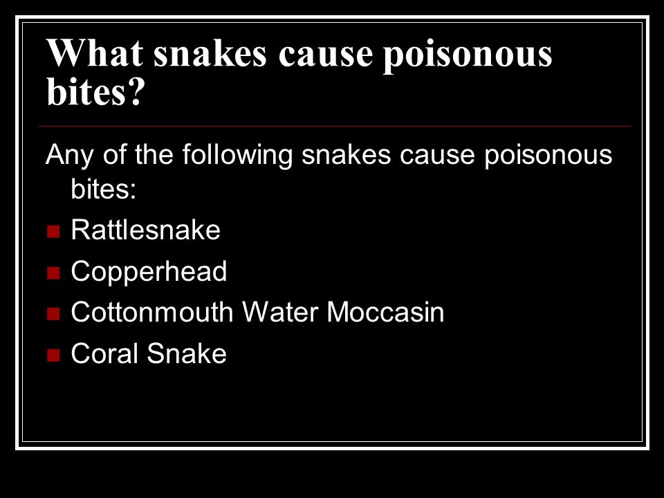 What snakes cause poisonous bites