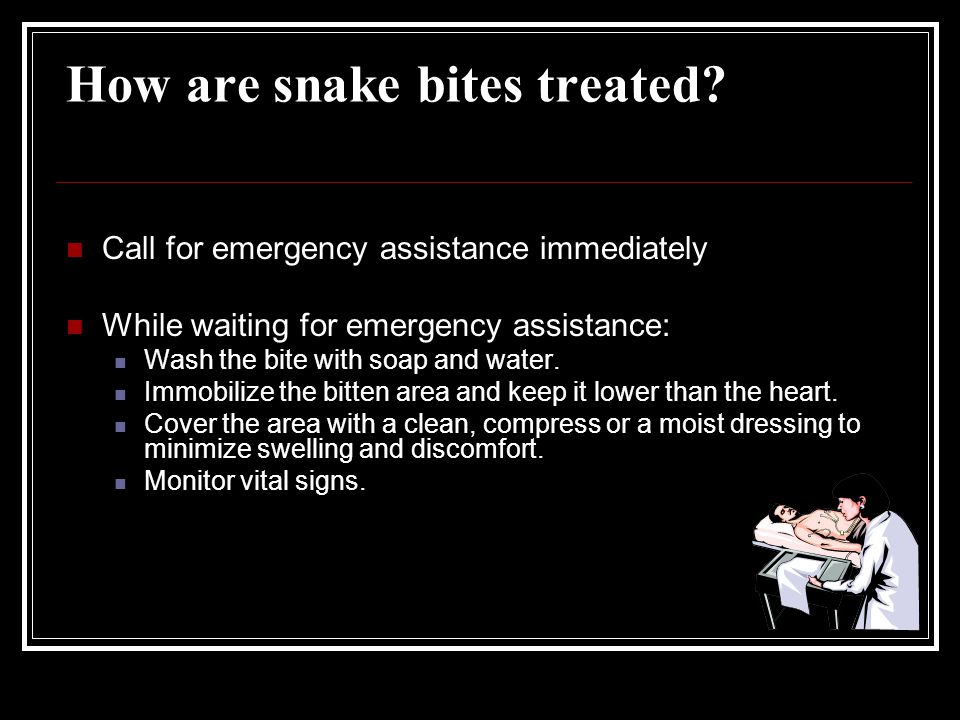 How are snake bites treated