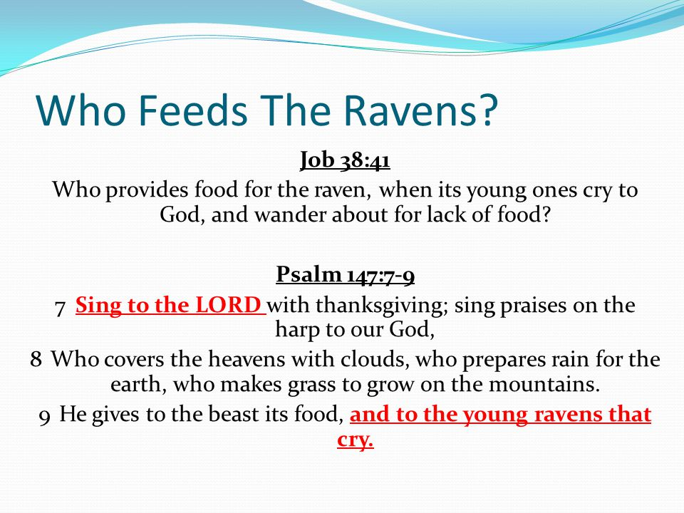 Who Feeds The Ravens