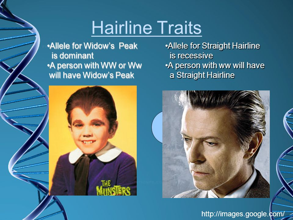 Hairline Traits Allele for Widow's Peak is dominant