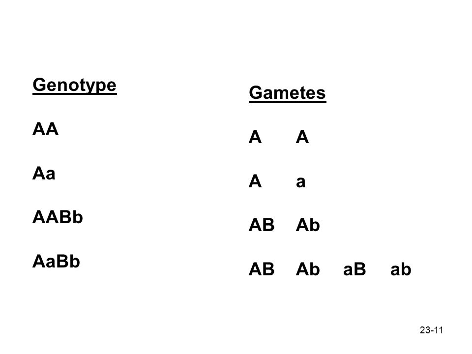 Genotype AA Aa AABb AaBb Gametes A A A a AB Ab AB Ab aB ab