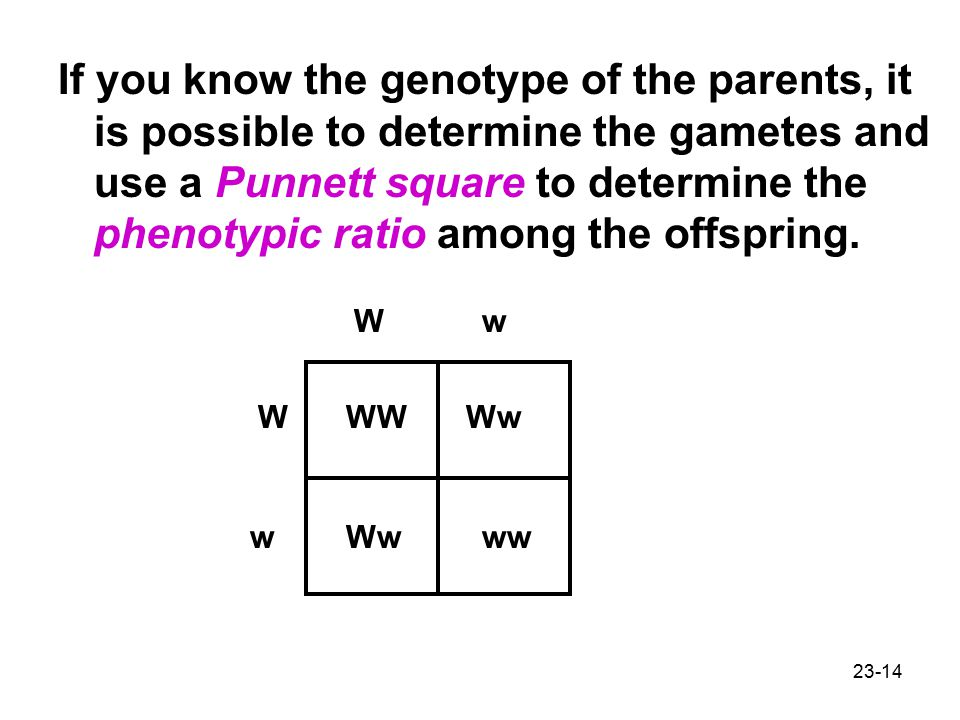 If you know the genotype of the parents, it is possible to determine the gametes and use a Punnett square to determine the phenotypic ratio among the offspring.