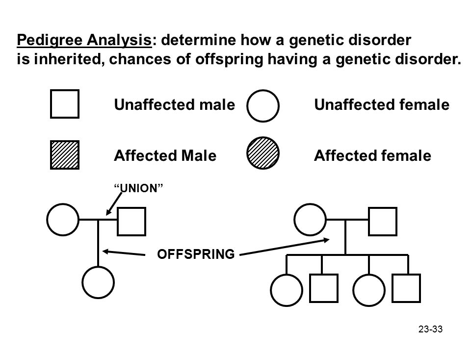 Pedigree Analysis: determine how a genetic disorder