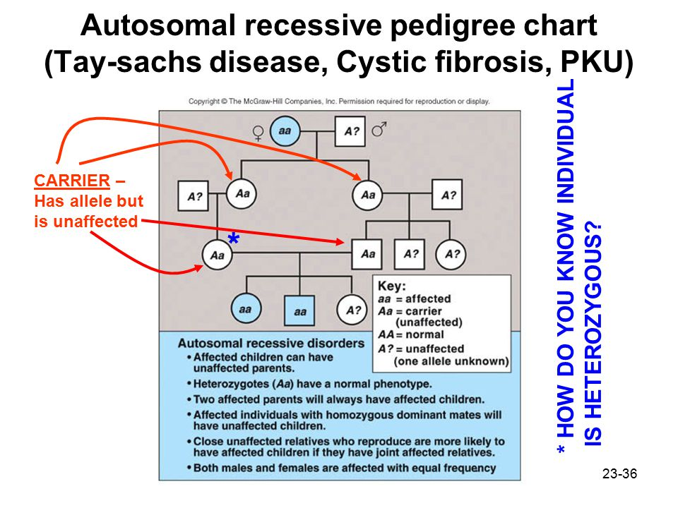 Autosomal recessive pedigree chart (Tay-sachs disease, Cystic fibrosis, PKU)