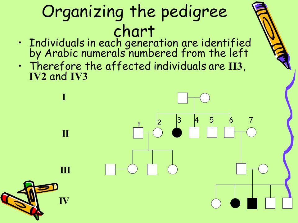 Organizing the pedigree chart