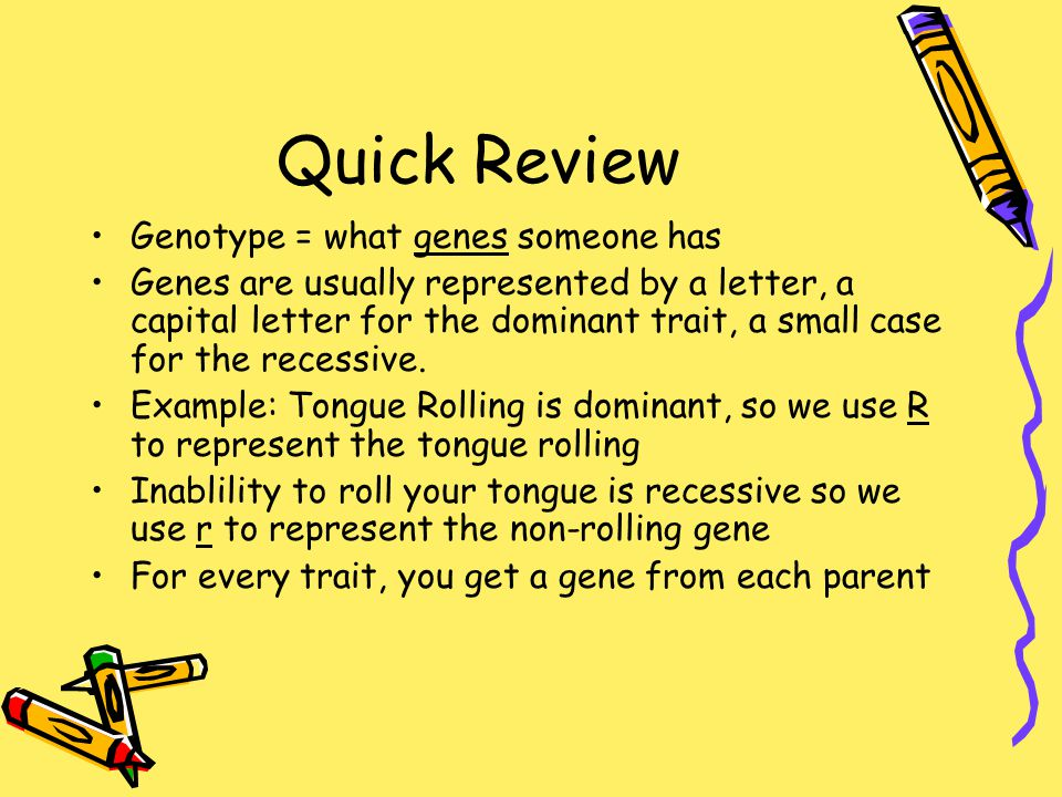 Quick Review Genotype = what genes someone has