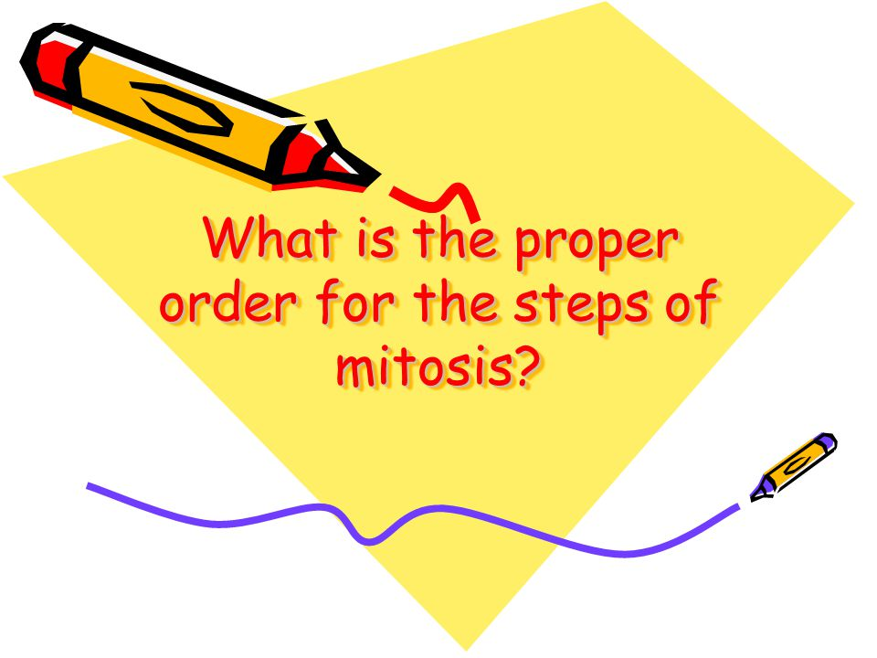 What is the proper order for the steps of mitosis