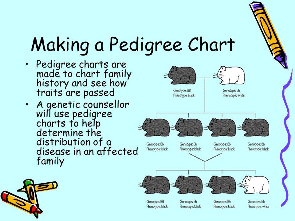 pedigree chart maker
