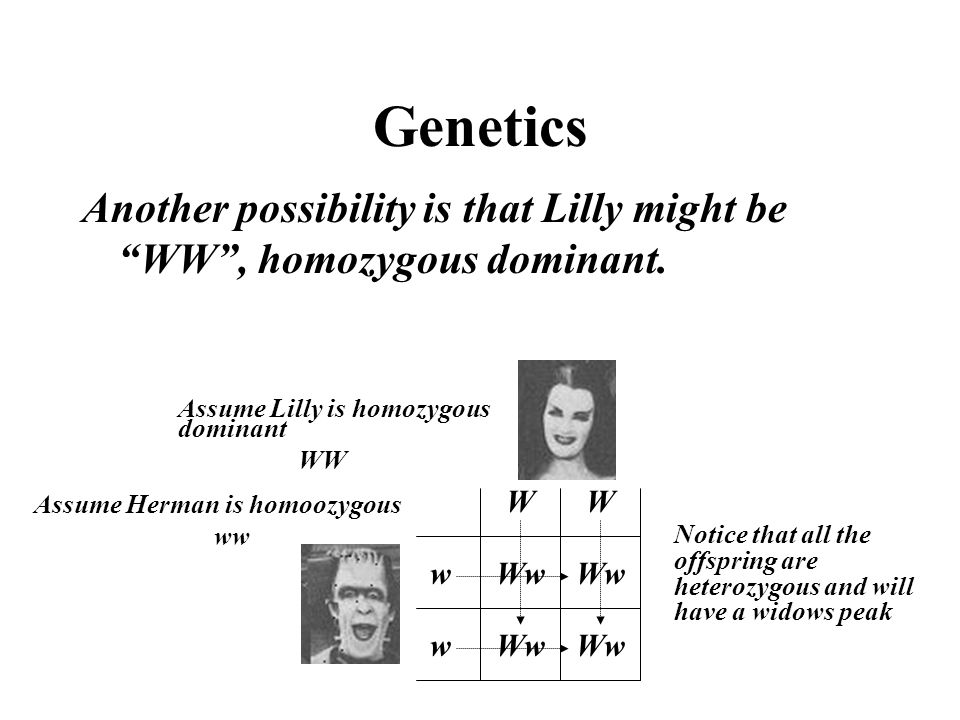 Genetics Another possibility is that Lilly might be WW , homozygous dominant. Assume Lilly is homozygous dominant.