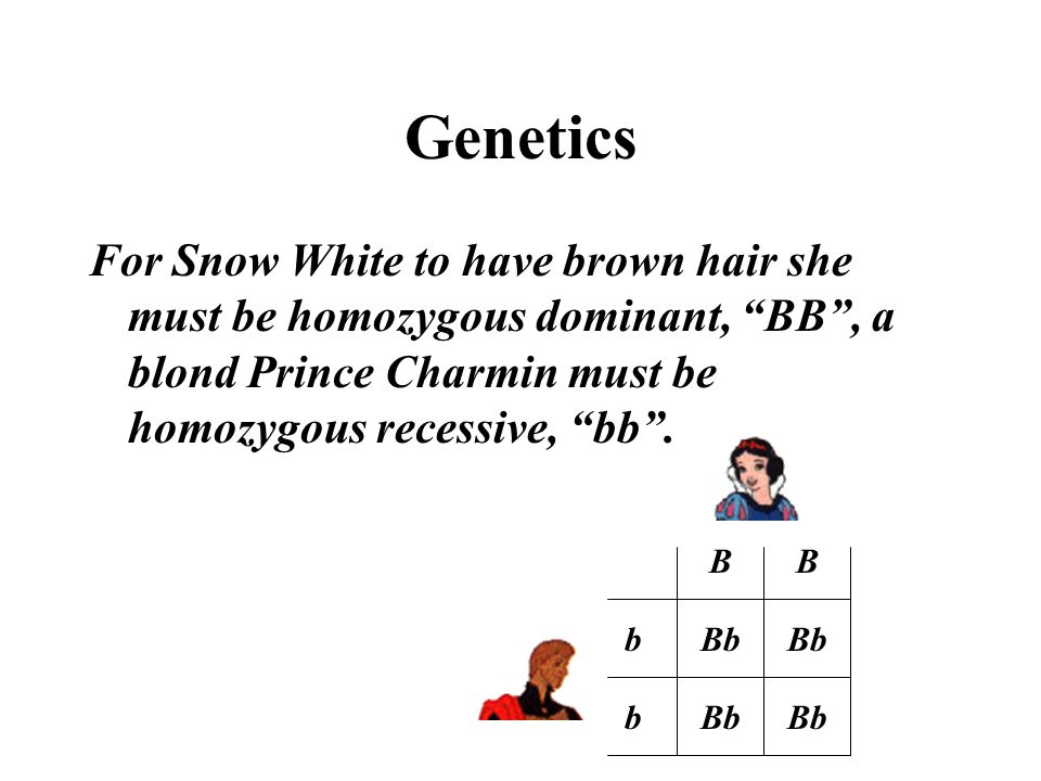 Genetics For Snow White to have brown hair she must be homozygous dominant, BB , a blond Prince Charmin must be homozygous recessive, bb .