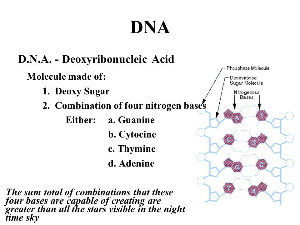 DNA D.N.A. - Deoxyribonucleic Acid Molecule made of: 1. Deoxy Sugar