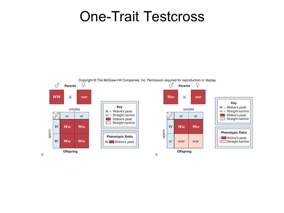 One-Trait Testcross