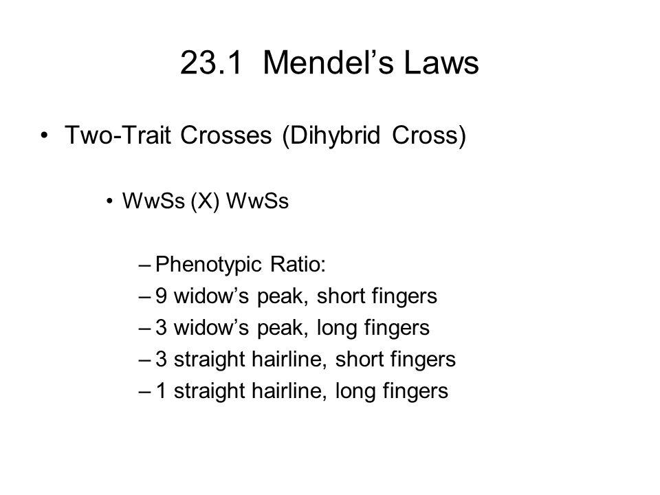 23.1 Mendel's Laws Two-Trait Crosses (Dihybrid Cross) WwSs (X) WwSs