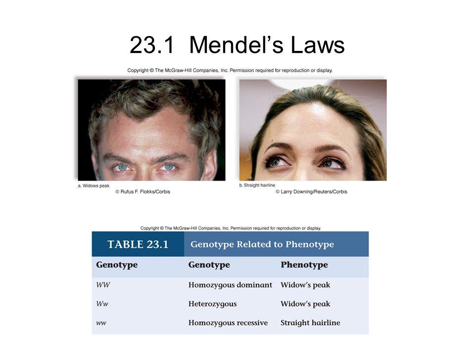 23.1 Mendel's Laws