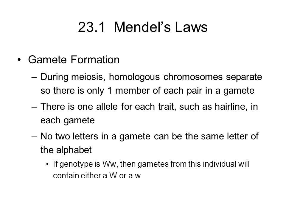 23.1 Mendel's Laws Gamete Formation