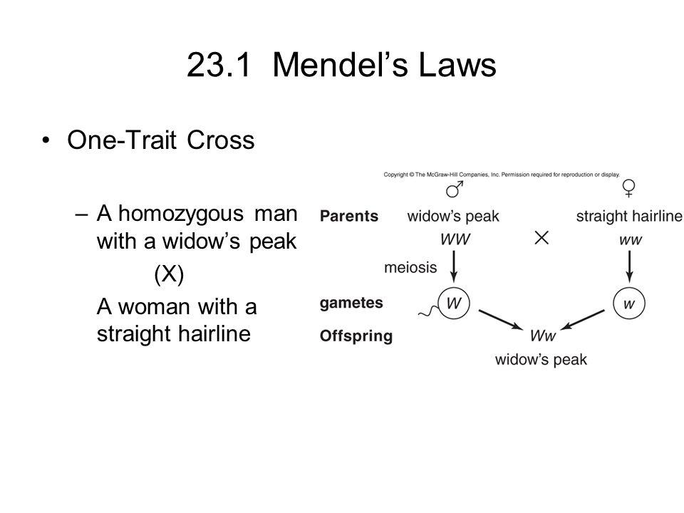 23.1 Mendel's Laws One-Trait Cross
