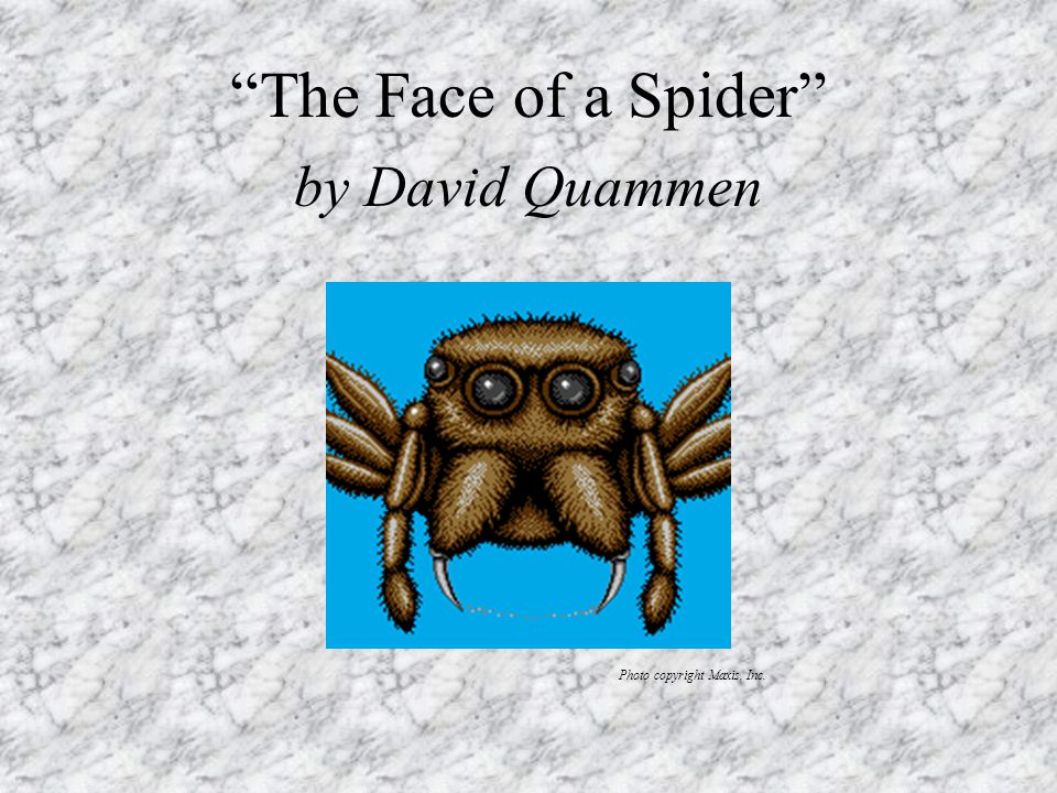 The Face of a Spider by David Quammen