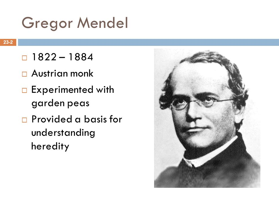 Gregor Mendel 1822 – 1884 Austrian monk Experimented with garden peas