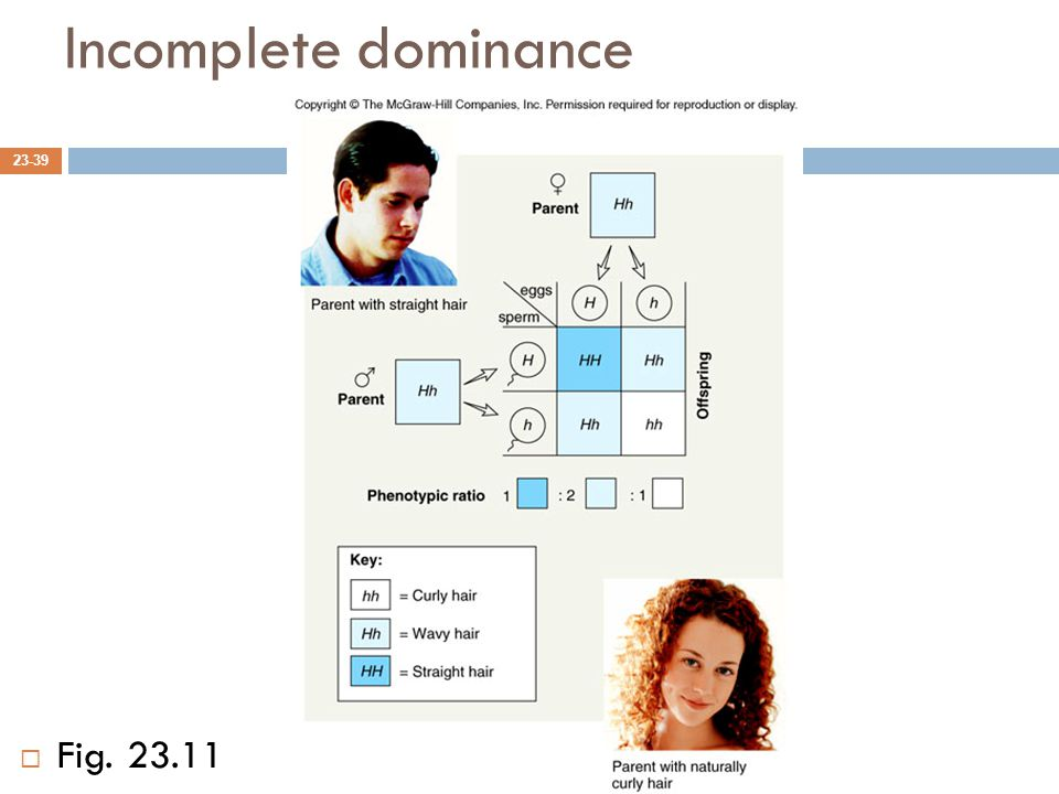 Incomplete dominance Fig. 23.11