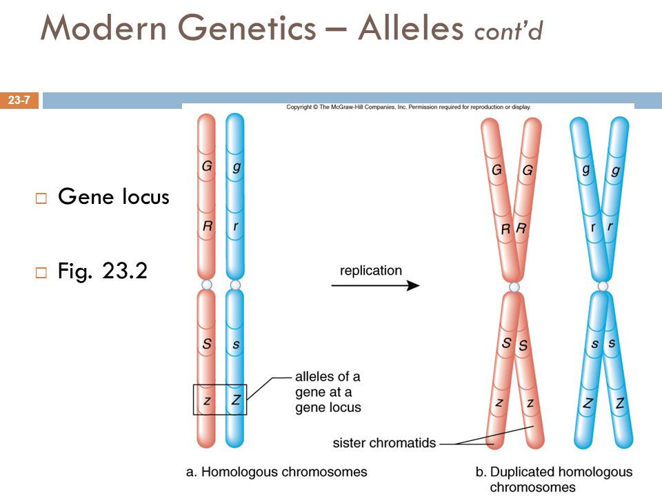 Modern Genetics – Alleles cont'd
