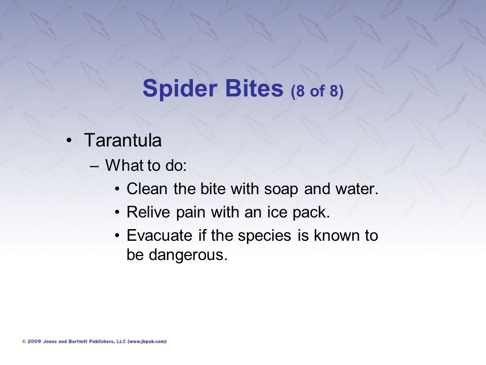 Spider Bites (8 of 8) Tarantula What to do: