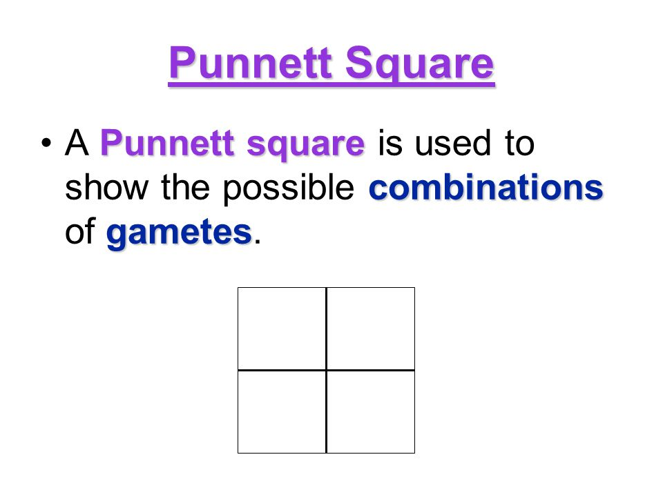 Punnett Square A Punnett square is used to show the possible combinations of gametes.
