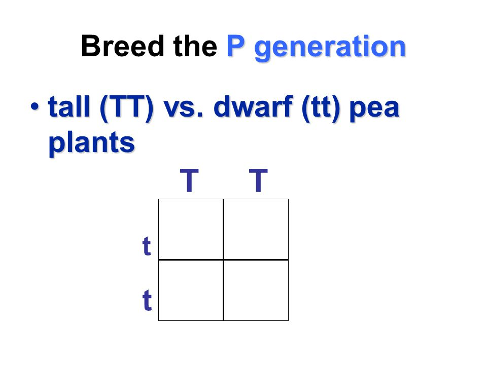 Breed the P generation tall (TT) vs. dwarf (tt) pea plants T t