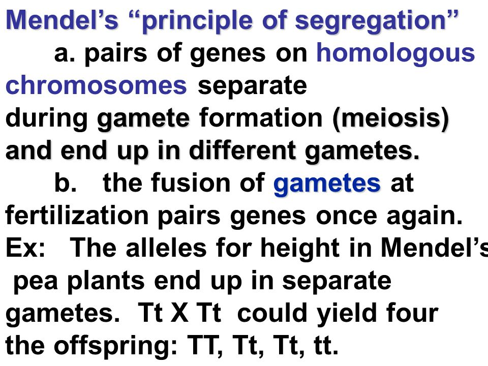Mendel's principle of segregation