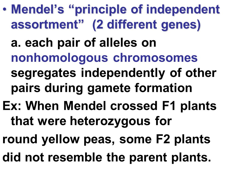 Mendel's principle of independent assortment (2 different genes)