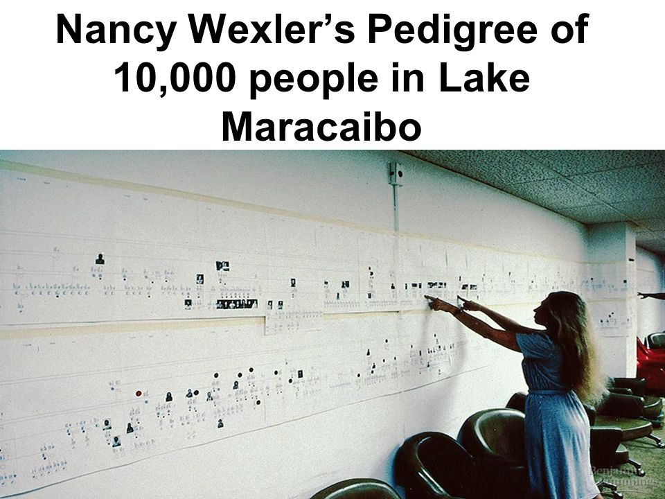 Nancy Wexler's Pedigree of 10,000 people in Lake Maracaibo