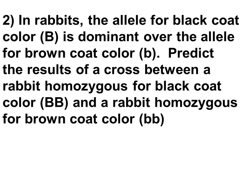 2) In rabbits, the allele for black coat